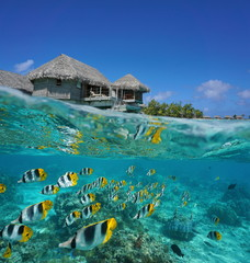Half and half, tropical bungalow over the water with a school of fish underwater, French Polynesia, Tikehau atoll, Pacific ocean