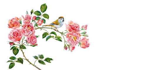 Branch of pink roses and little bird. Watercolor.