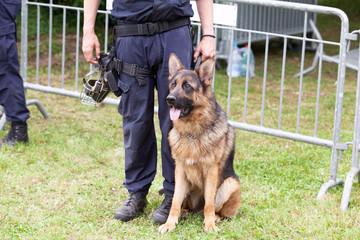 Police dog. Policeman with a German Shepherd on duty.
