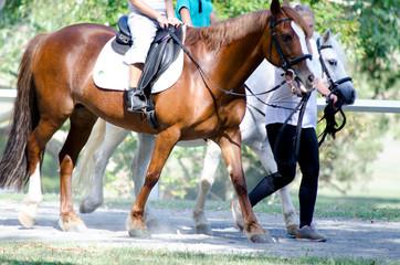 Brown horse being ridden through park