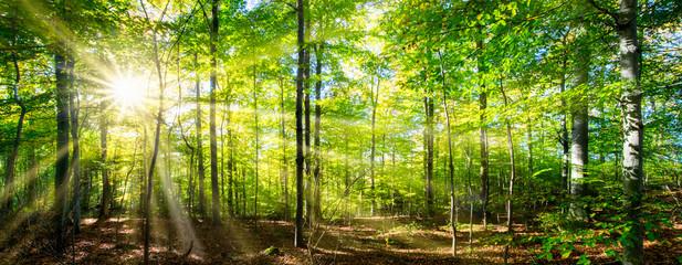 Zielony wiosenny las rozświetlony blaskiem słońca