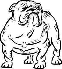 Funny english bulldog, vector illustration