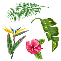 Tropical leaves and flowers set. Palms branches, bird of paradise flower, hibiscus