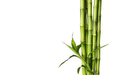 Pęd bambusa.
