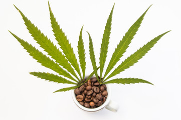 Marijuana or cannabis (hemp) with coffee (caffeine). Two cannabis leaf sticking out of small cups filled with coffee beans. Concept photo to show interaction of marijuana with coffee on human body