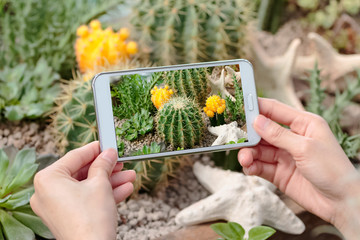 Hand holding camera taking photograph of cactus garden