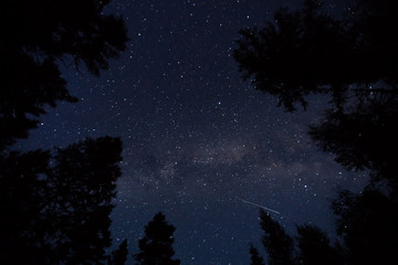 Low angle view of stars over the tree tops in forestat night