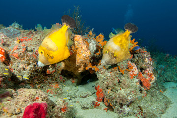 Tropical fish on sea bed
