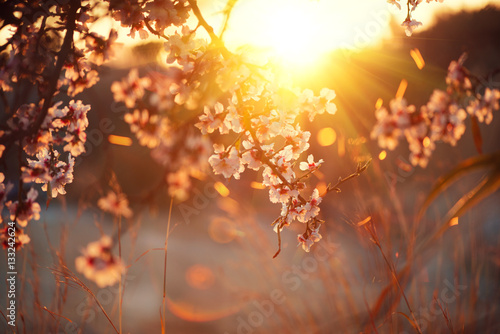 Wall mural Spring blossom background. Beautiful nature scene with blooming tree and sun flare. Sunny day. Spring flowers