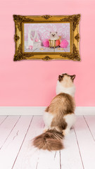 Ragdoll adult cat looking at a picture with a baby cat in bath in a golden picture frame in a pink living room environment