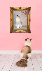 Ragdoll adult cat looking at her own picture in a golden picture frame in a pink living room environment