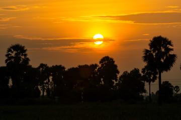 After a beautiful sunset, palm