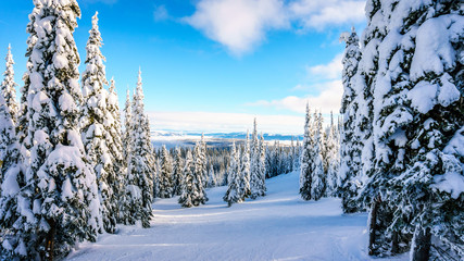 Wall Mural - Glade Ski Slopes through the Winter Landscape on the Ski Hills at the village of Sun Peaks in the Shuswap Highlands of central British Columbia, Canada