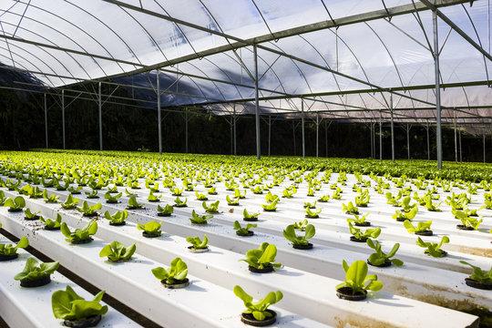 Organic hydroponic plant growing