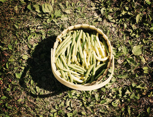 Full basket of green beans