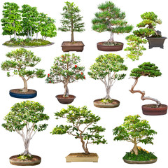 Bonsai set isolated on white