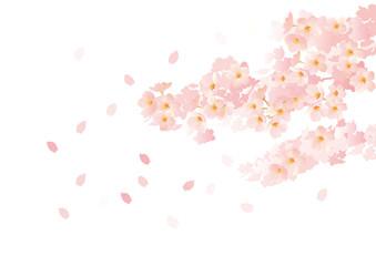 春桜の トンネル