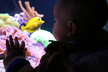 Baby's first time visiting an aquarium