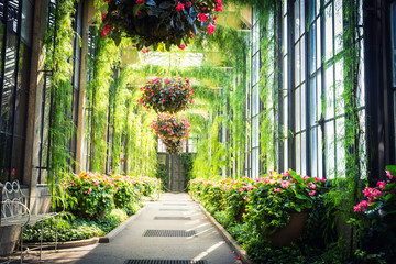 Green alley with flowers hanging in pots.