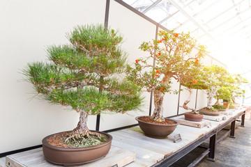 Natural bonsai set on counter