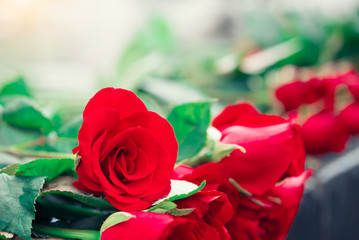 Red rose for valentine and wedding background.
