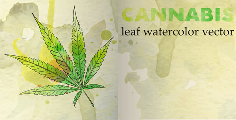 Marijuana leaf on the old watercolor paper background, vector image