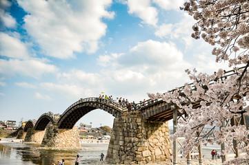 Canvas Prints Bridge Cherry-blossoms and Kintai bridge in Iwakuni, Yamaguchi, Japan