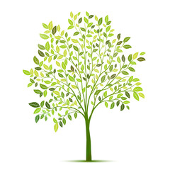Green tree with leaves on white background vector