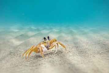 Underwater, Crab on the sandy bottom