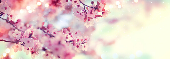 Spring border or background art with pink blossom. Beautiful nature scene with blooming tree and sun flare Fototapete