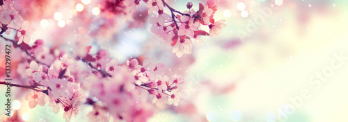 Fototapete Spring border or background art with pink blossom. Beautiful nature scene with blooming tree and sun flare