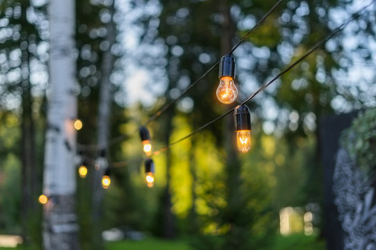 Light bulbs hanging on a wire in the forest.