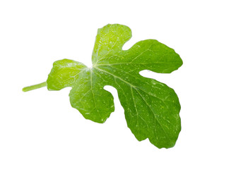 Green leaf with water drop isolated on white background