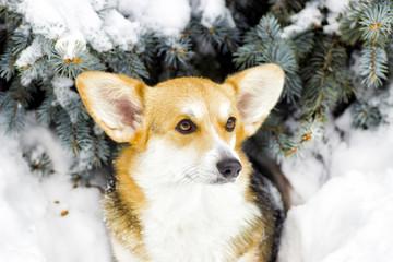 Dog on a winter walk