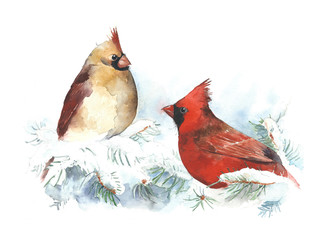 Birds cardinals watercolor painting illustration isolated on white background hand made greeting card