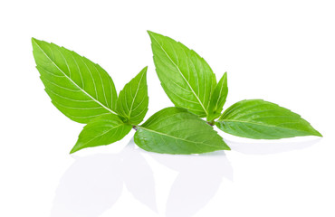 Sweet Basil or Thai basil isolated on white background.