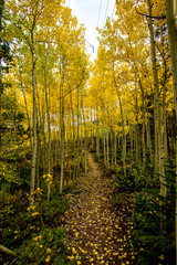Colorado Fall Path