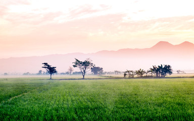 Very vast, broad, extensive, spacious rice field, stretched into the horizon.   Behind it is a line of hills and mountains that also expansive.  Group of tree in far away.  Beautiful red cloud and red