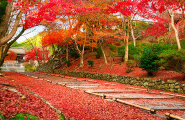 Japan Kyoto autumn image. Red leaves foliage on the entrance passage to Bishamon-do.