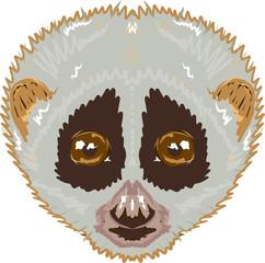 Slow loris sketch vector illustration clip-art image