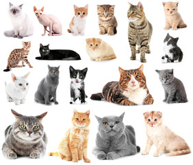 Collage of cute cats on white background