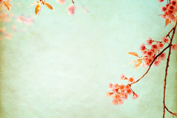 Vintage paper postcard - beautiful sakura tree flower (cherry blossom) in spring. vintage color tone style.
