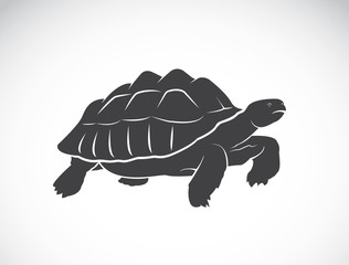 Vector of a turtle on white background. Reptile. Wild Animals. (