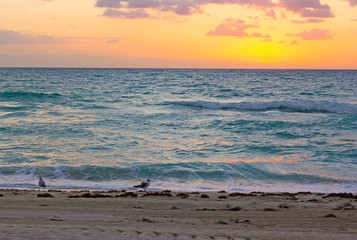 Fototapete - Sunrise over the ocean in Miami Beach. Seagulls wait for the sun to appear above the clouds.