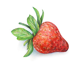 Strawberry on white background. Watercolor drawing of strawberry berries. Handwork drawn