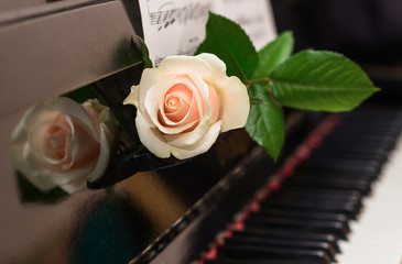 The white rose lying on retro piano with musical sheets. Romantic concept. Copy space. Valentines Day background
