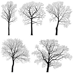 Tree collection - vector silhouette