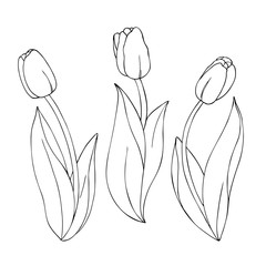vector monochrome illustration of tulip flowers