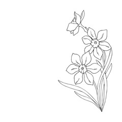 vector monochrome illustration of narcissus daffodil flowers