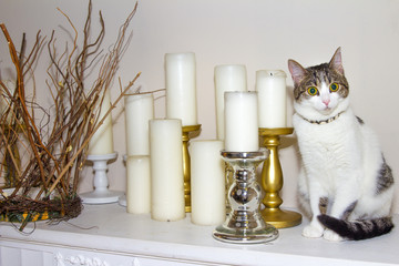 Surprised Cat and candles